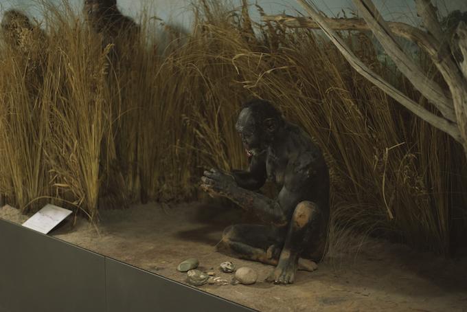 museo della preistoria